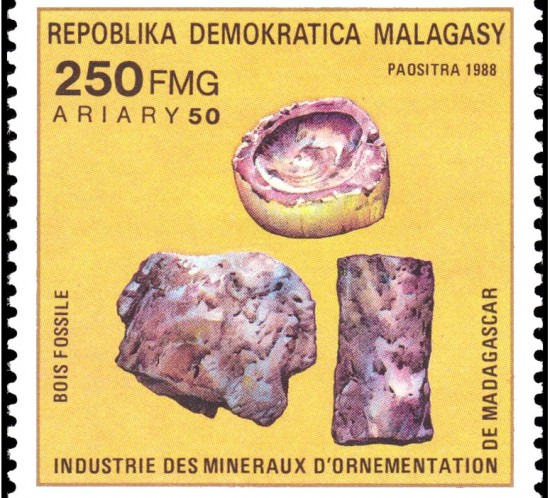 20110331162112_petrified_wood_madagascar_1988_t.800.jpg
